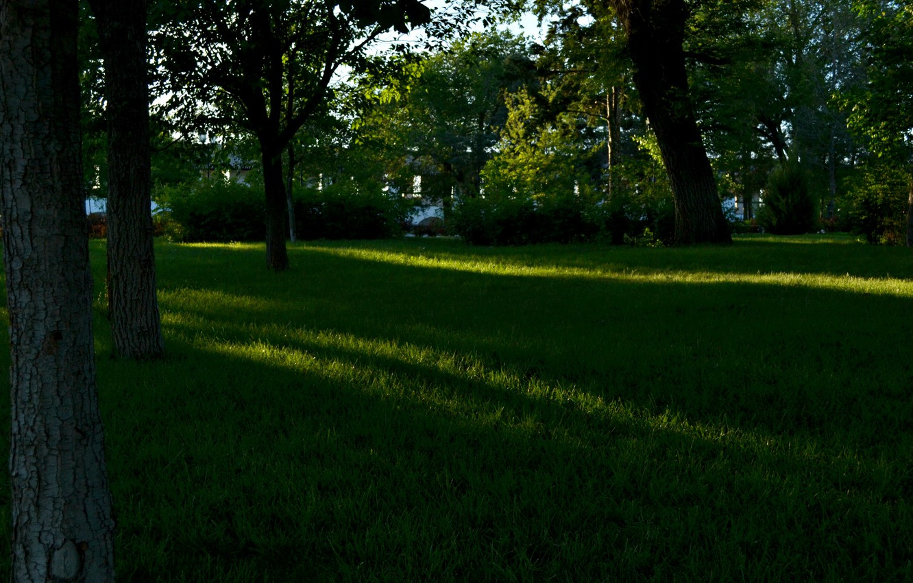 Photo wallpaper summer, grass, leaves, the sun, rays, trees, landscape, nature, shadow, day, summer, grass, trees, leaves, …