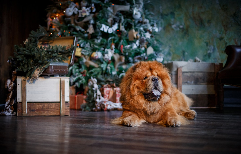 Photo wallpaper tree, dog, Christmas, New year, Chow