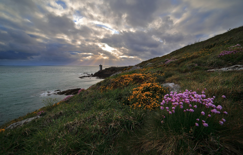 flowers, coast, lighthouse