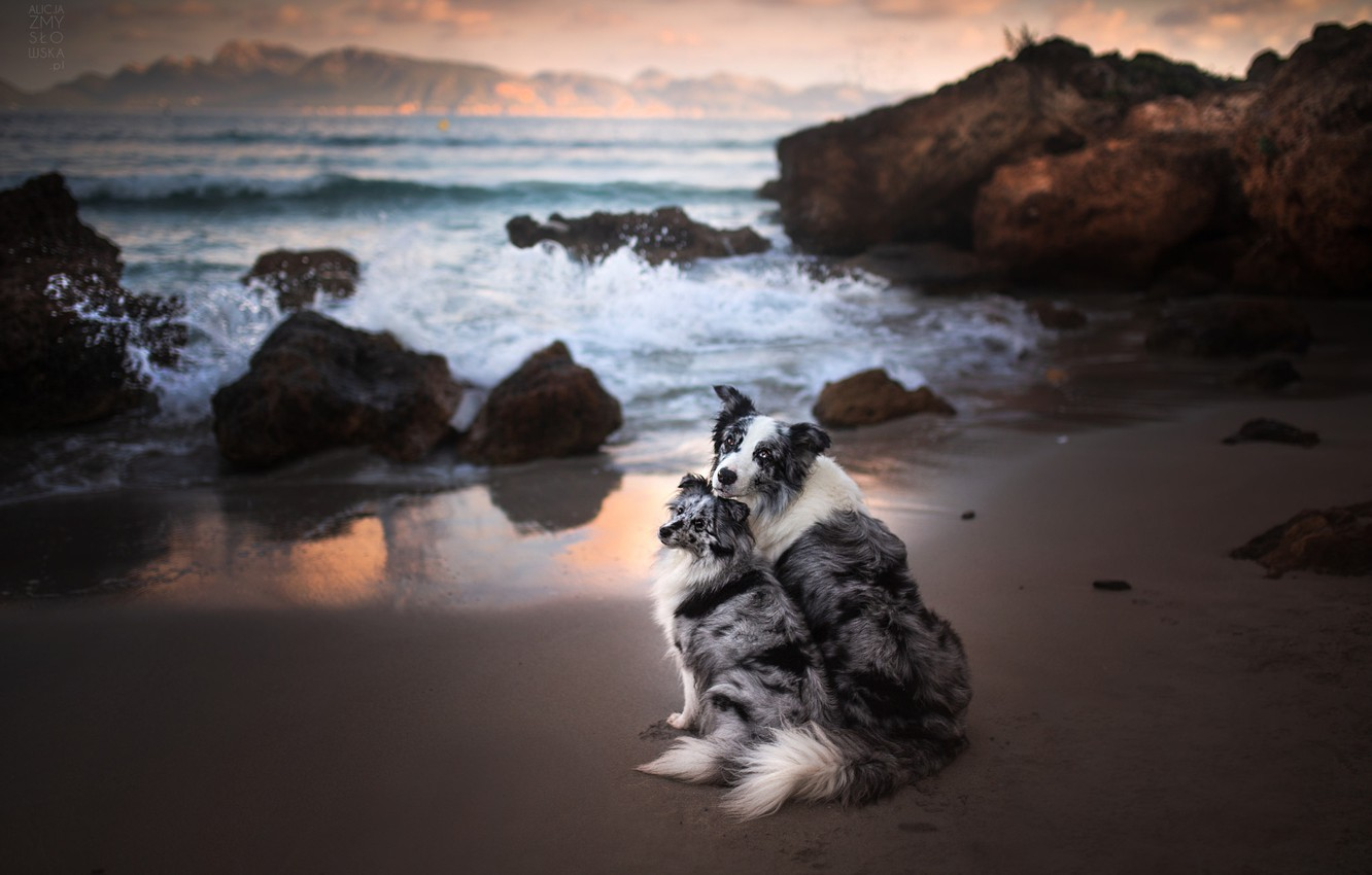Photo wallpaper sea, dogs, the ocean, rocks, a couple, two dogs