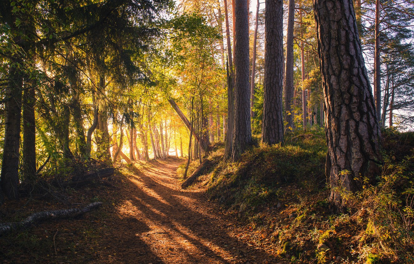 Photo wallpaper road, forest, Finland, sunlight