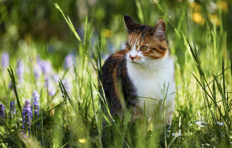 Photo wallpaper cat, summer, grass, look, face, light, flowers, nature, pose, blur, walk, bokeh, spotted, motley