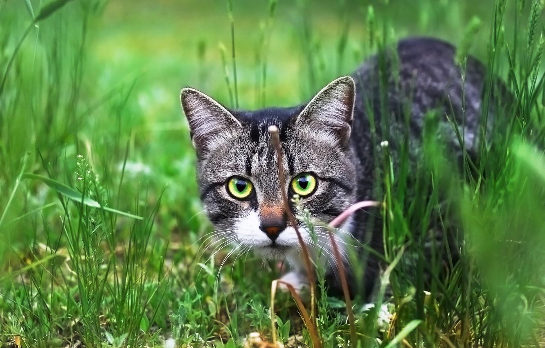 Photo wallpaper cat, look, weed, cat