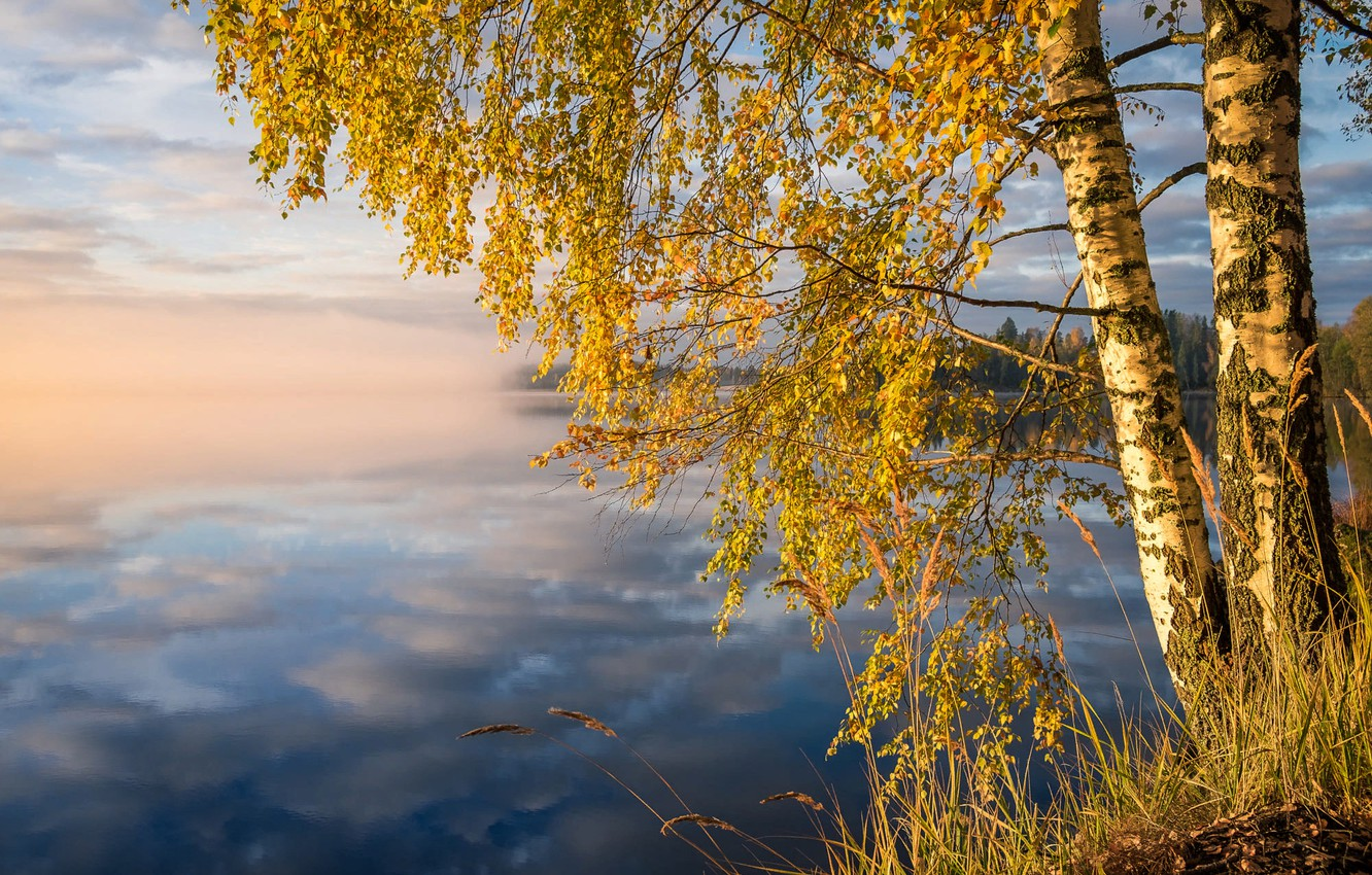 Photo wallpaper autumn, forest, grass, clouds, trees, landscape, nature, fog, lake, reflection, shore, morning, birch, Finland