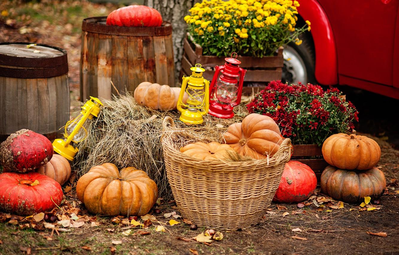 Photo wallpaper autumn, leaves, harvest, pumpkin, flowers, autumn, leaves, pumpkin, harvest