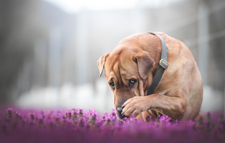 Photo wallpaper face, flowers, paw, dog, bokeh