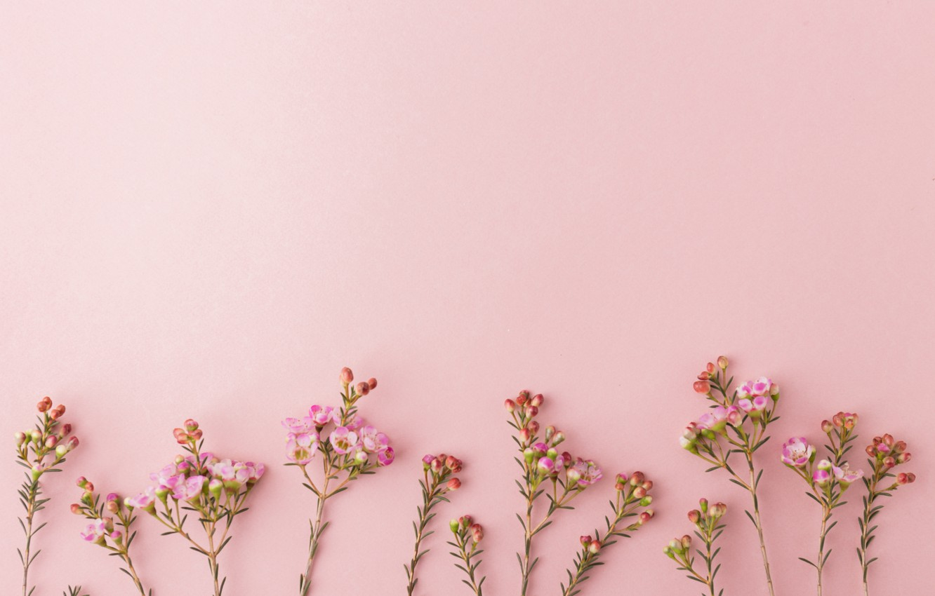 Wallpaper Background Pink Flowers Images For Desktop Section