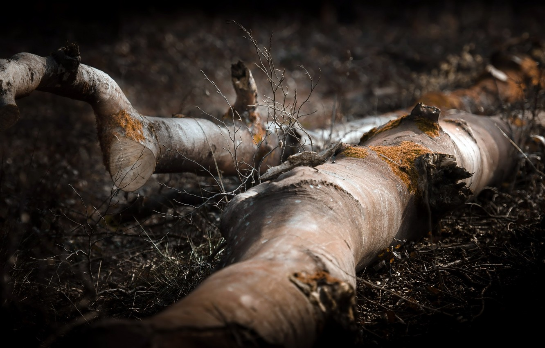 Photo wallpaper nature, tree, log