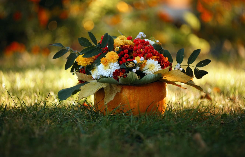 Photo wallpaper autumn, flowers, nature