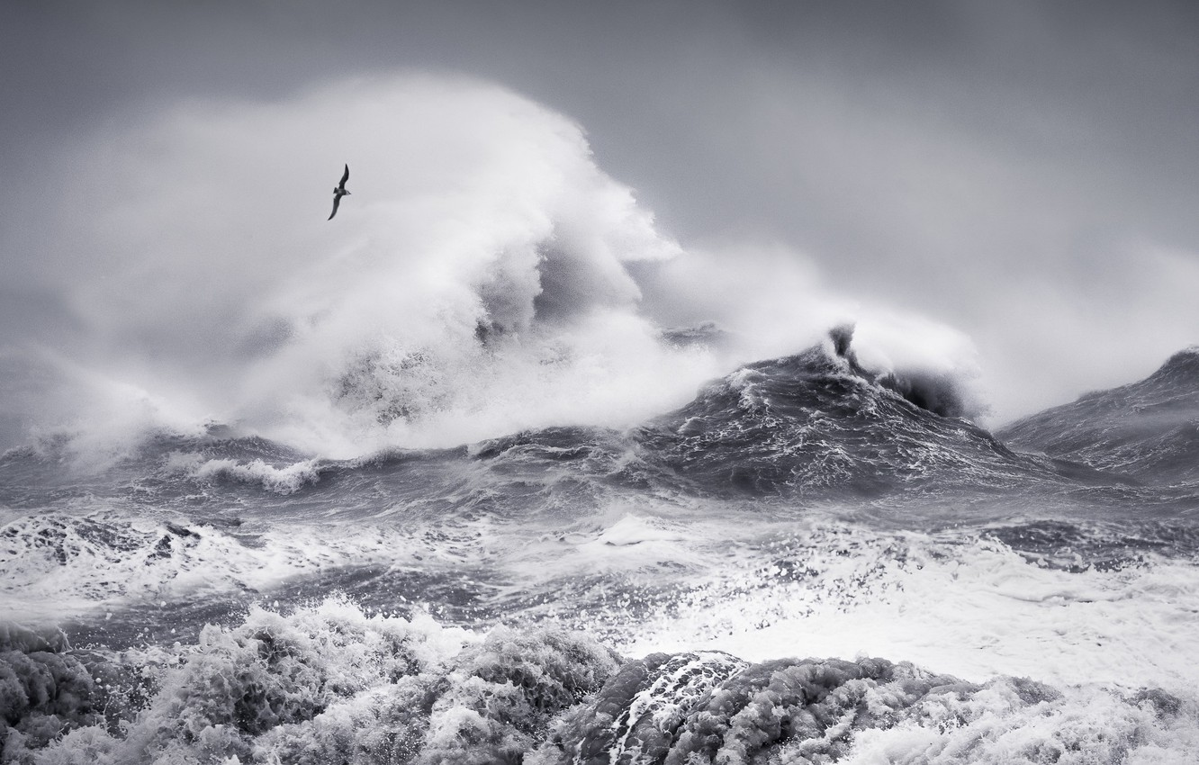Photo wallpaper sea, wave, the sky, squirt, clouds, storm, bird, wave, storm, Seagull, monochrome, black and white …