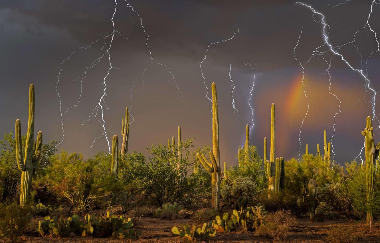 Photo wallpaper the storm, lightning, cactus, AZ, USA, Tucson, mountain Tortolita
