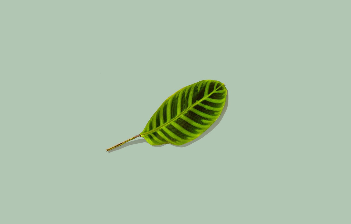 Photo wallpaper background, leaf, minimalism, green