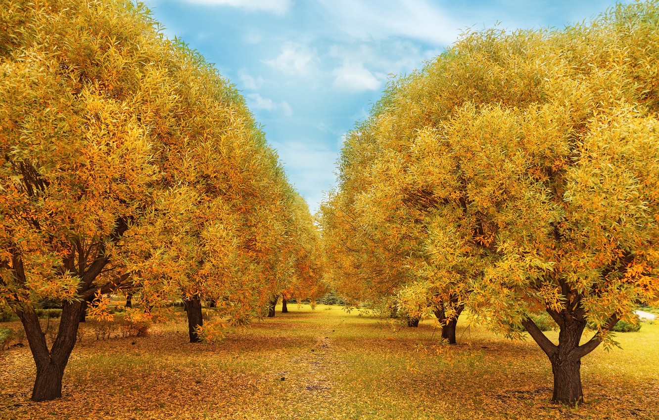 Photo wallpaper autumn, forest, leaves, trees, Park, forest, nature, yellow, park, autumn, leaves, tree