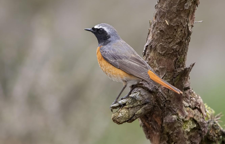 Photo wallpaper bird, snag, bird