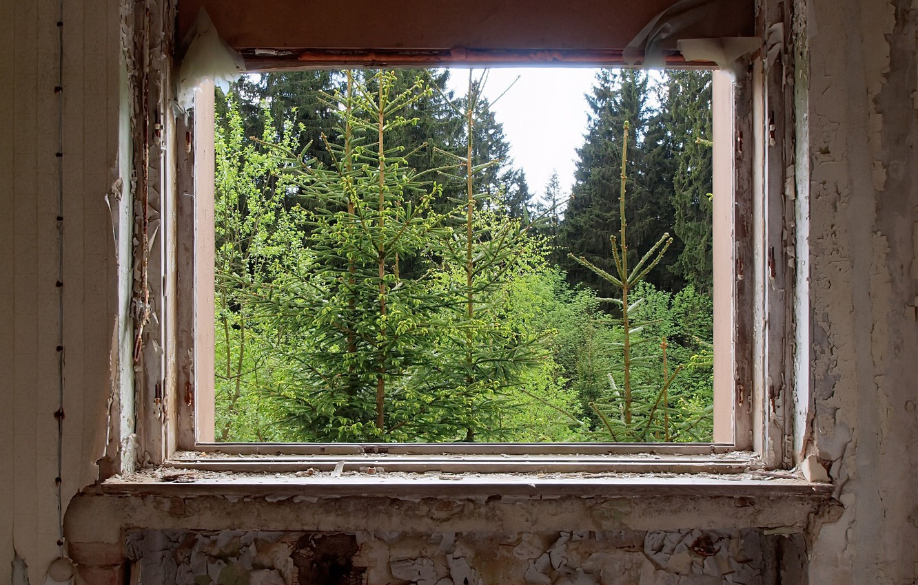 Photo wallpaper forest, room, window