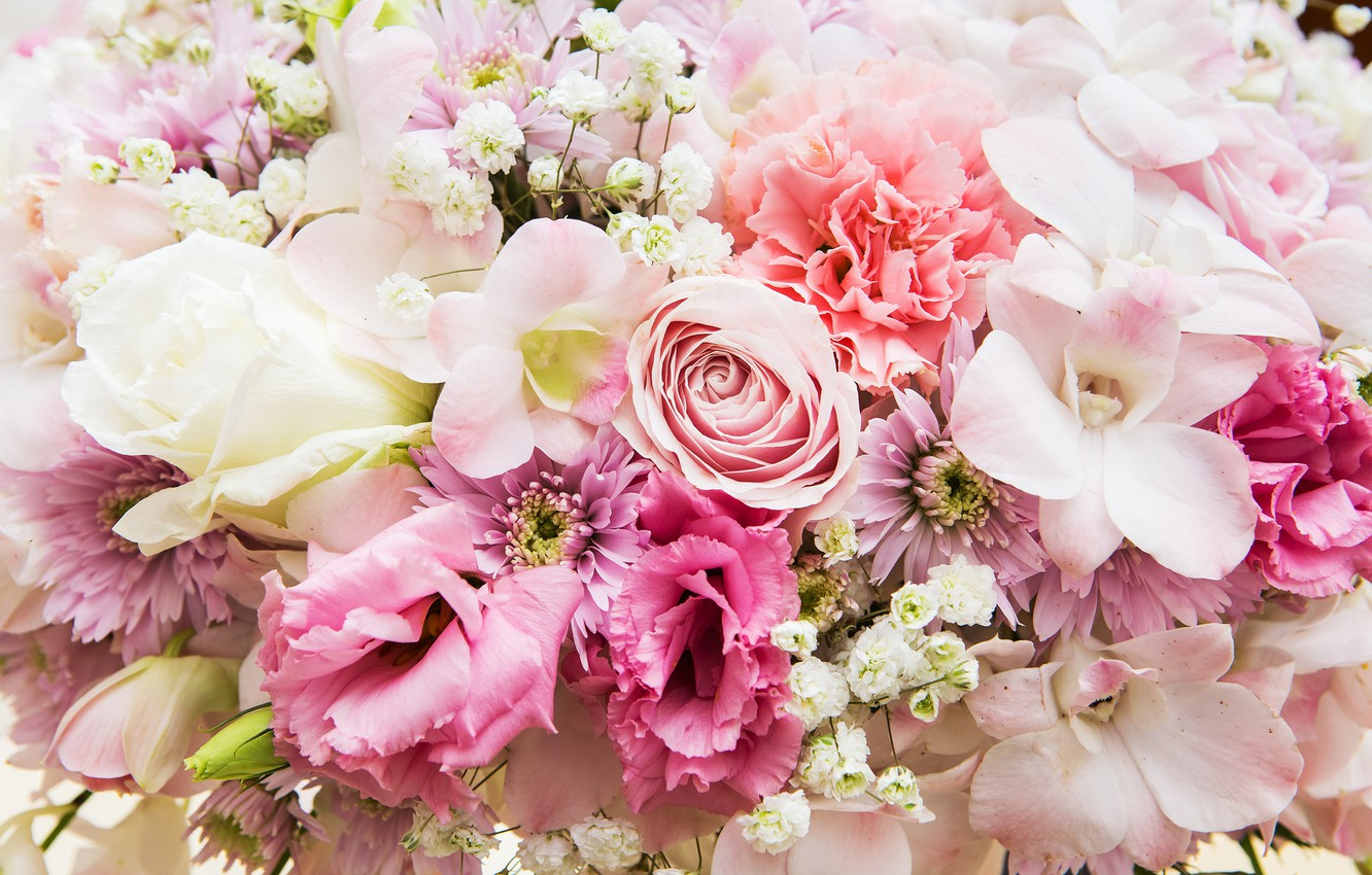 Wallpaper Flowers Background Roses Colorful Pink White White