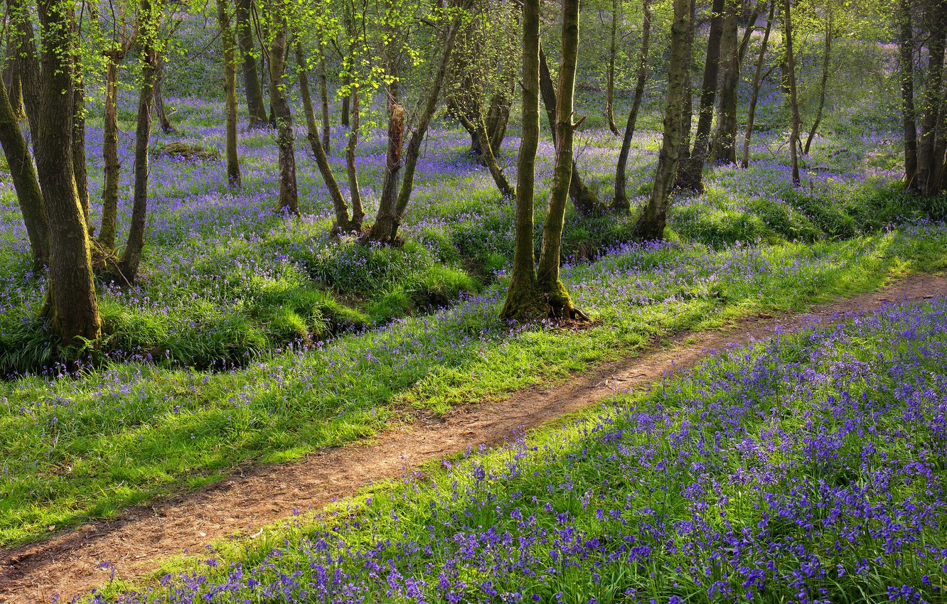 Photo wallpaper forest, trees, flowers, photo, path