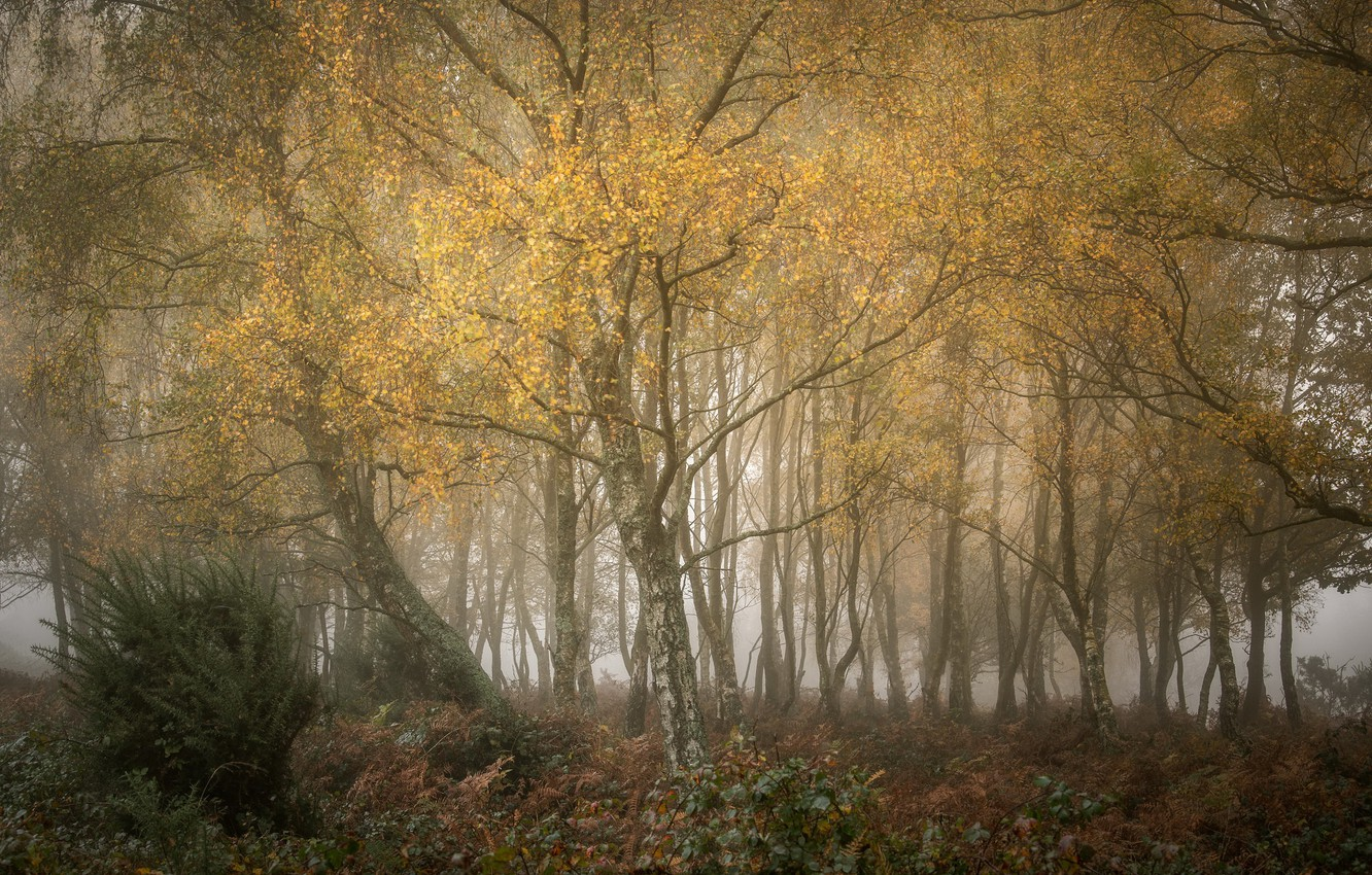 Photo wallpaper autumn, forest, fog