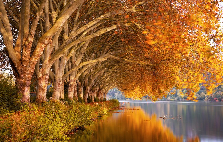 Photo wallpaper autumn, trees, nature, river