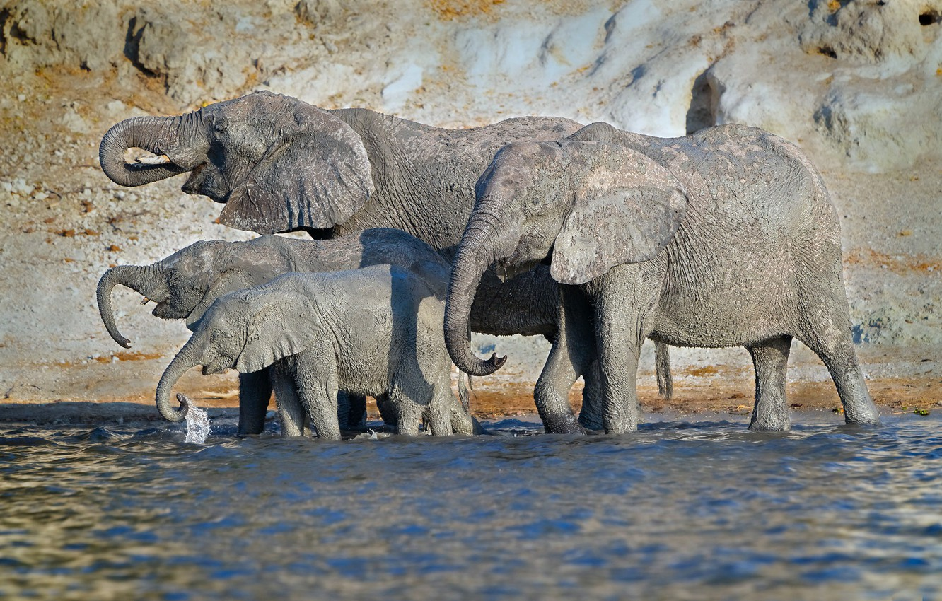 Photo wallpaper nature, lake, elephants