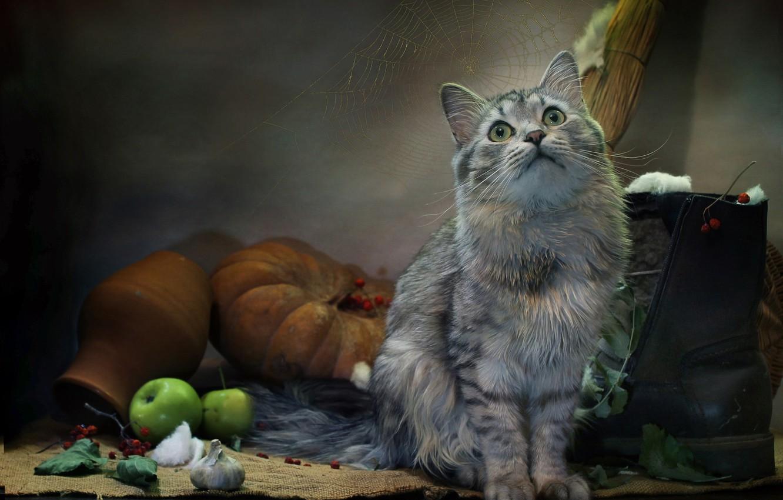 Photo wallpaper cat, cat, look, leaves, animal, apples, web, pumpkin, burlap, garlic, boots, pot, Kovaleva Svetlana, Svetlana …