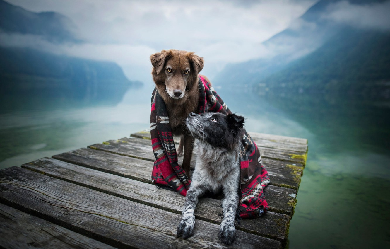 Photo wallpaper autumn, dogs, landscape, mountains, nature, pose, fog, comfort, lake, reflection, together, shore, Board, two, morning, …