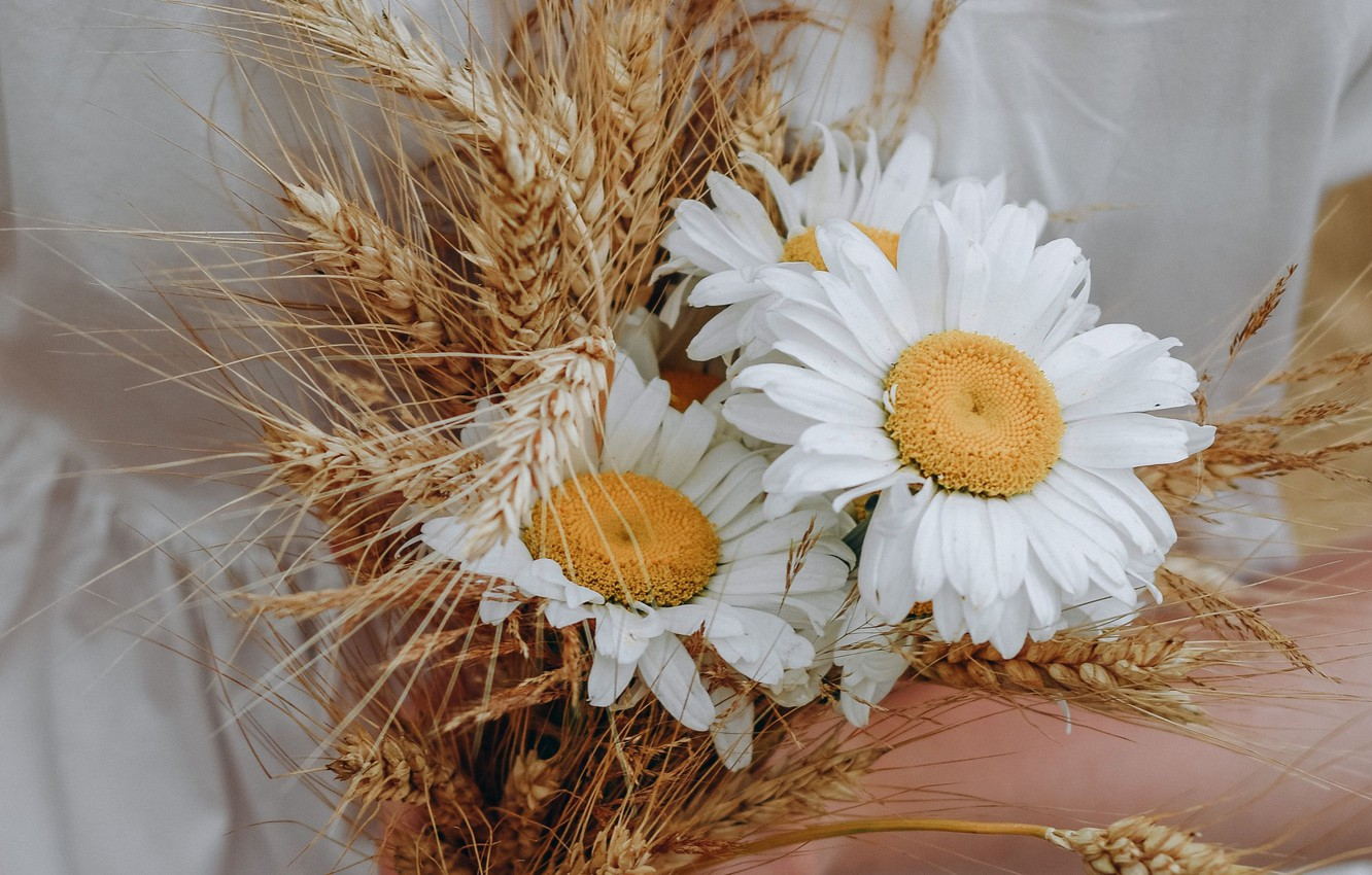 Photo wallpaper flowers, chamomile, bouquet, ears
