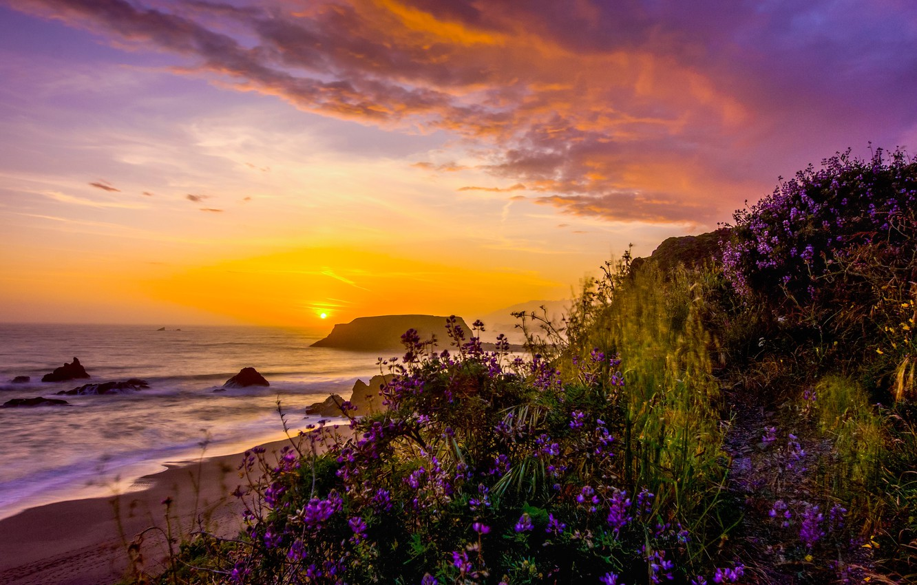 Photo wallpaper landscape, sunset, nature, the ocean, shore, vegetation, USA