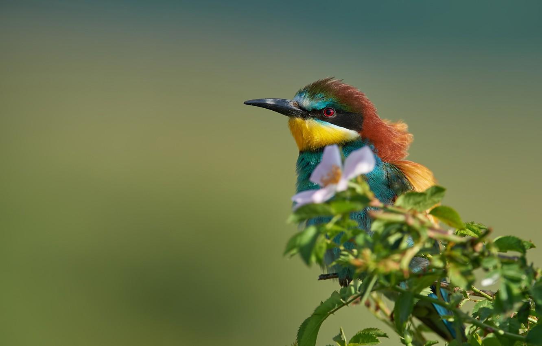 Photo wallpaper flower, background, bird, branch, briar, European bee-eater