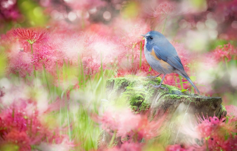 Photo wallpaper flowers, bird, sweetheart, glade, stump, treatment, garden, red, pink, bird, bokeh, he lost his parents,, …