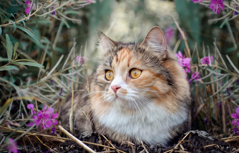 Photo wallpaper cat, grass, nature