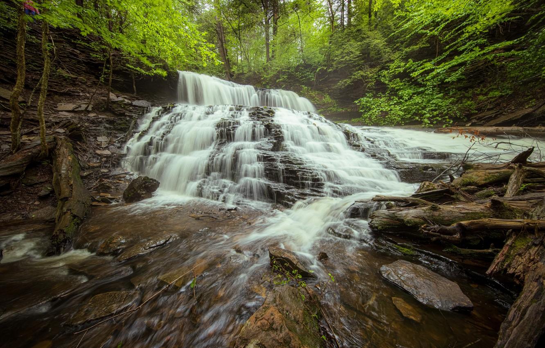 Photo wallpaper forest, waterfall, PA, cascade, driftwood, Pennsylvania, Ricketts Glen State Park, State Park Ricketts Glen, Mohawk …