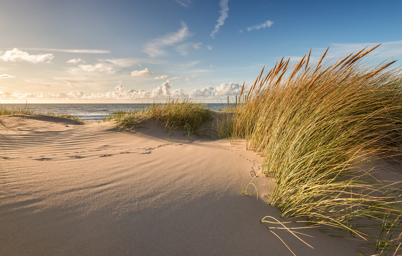 Photo wallpaper sea, summer, shore, dunes