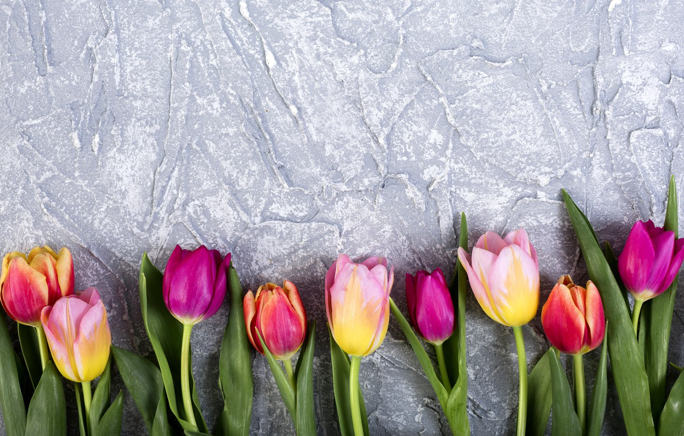 Wallpaper flowers, colorful, tulips ...