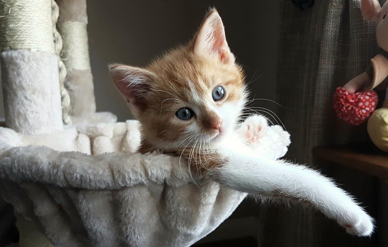 Photo wallpaper kitty, baby, cute