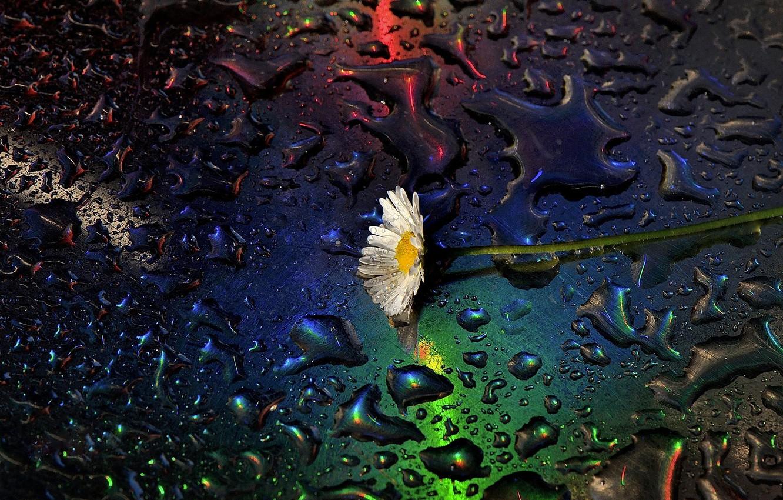 Photo wallpaper water, drops, macro, Daisy, Claudio Moretti