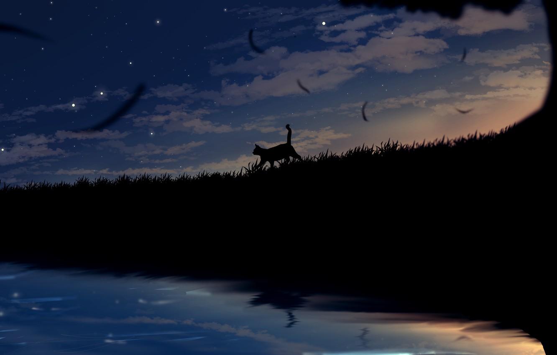 Photo wallpaper field, cat, the sky, grass, cat, night
