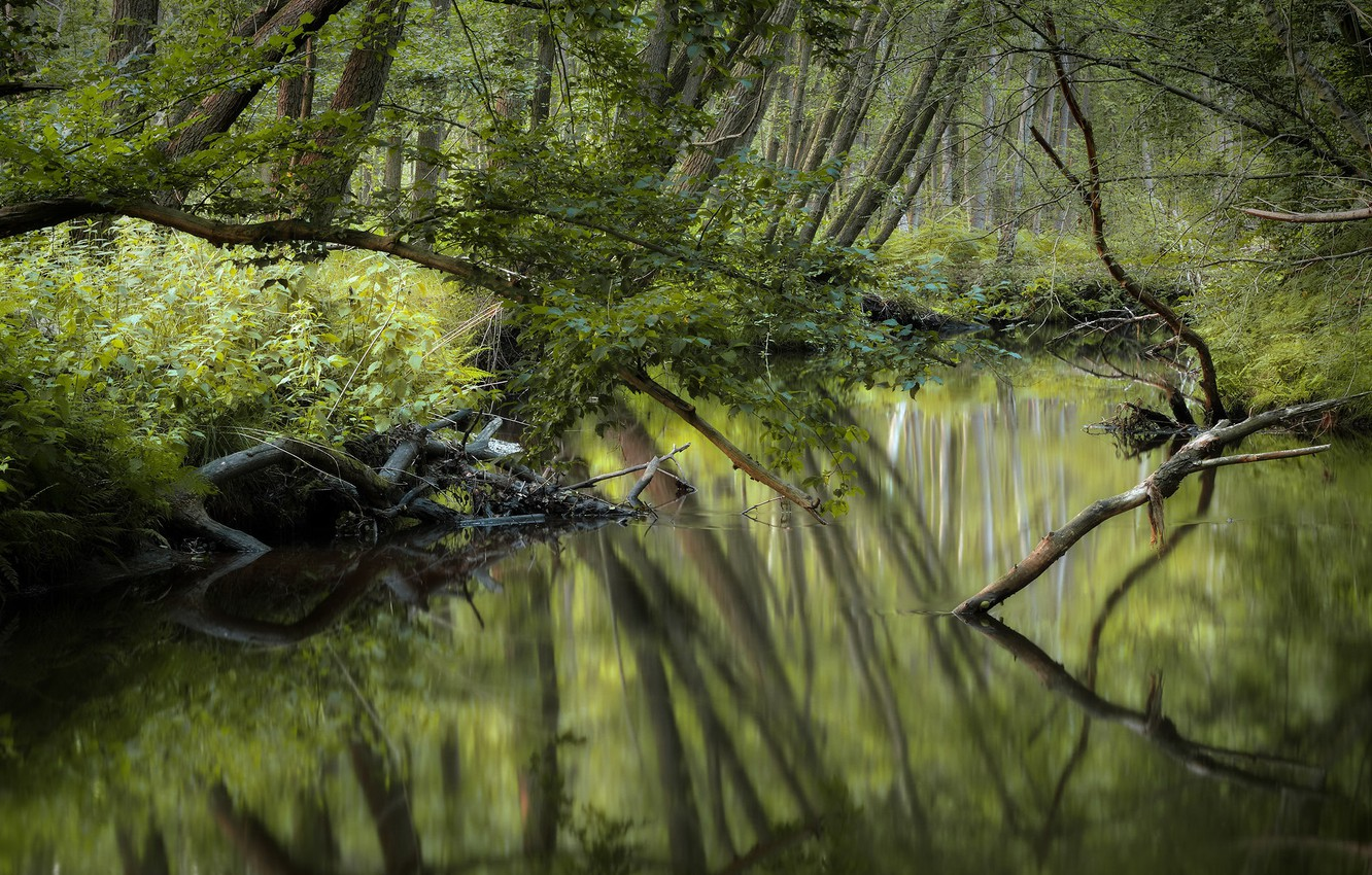 Photo wallpaper forest, nature, river