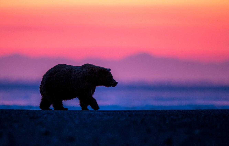 Photo wallpaper dawn, morning, bear, Alaska
