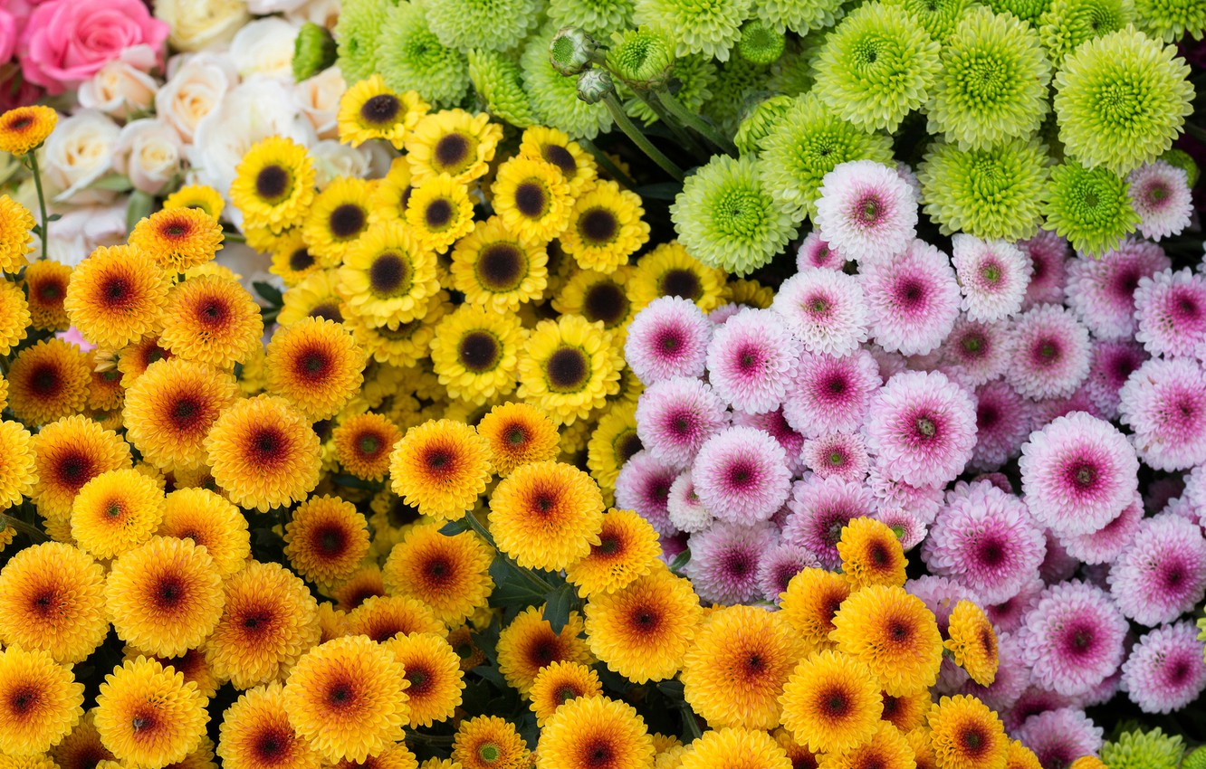 Photo wallpaper flowers, yellow, green, orange, a lot, different, lilac, bouquets, cuts