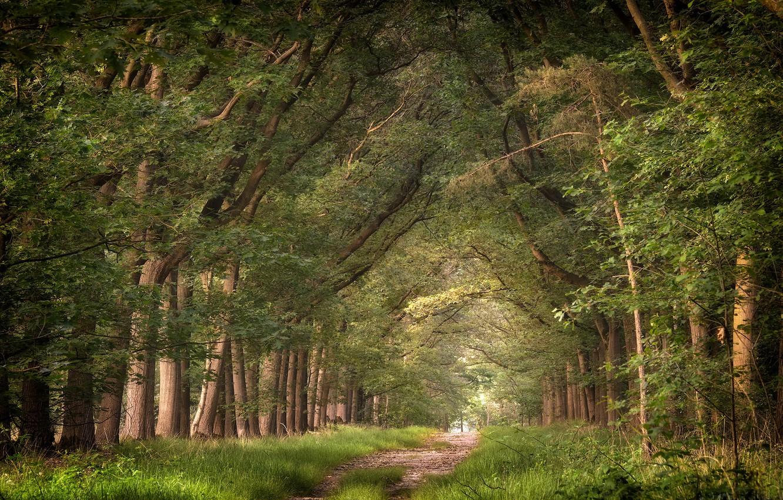 Wallpaper Forest Summer Nature Images For Desktop Section Priroda Download