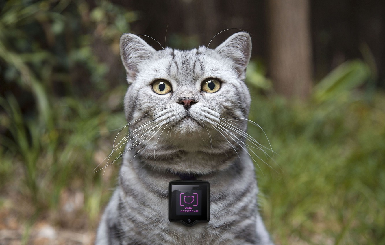 Photo wallpaper concept, device, camera for cats, Whiskas, cat cameras, Catstacam, gadgets for cats, Whiskas