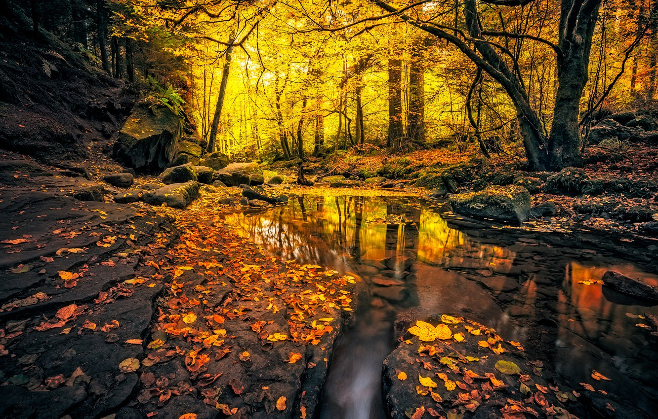Photo wallpaper autumn, forest, leaves, light, trees, branches, nature, pond, Park, reflection, stream, stones, rocks, branch, trunks, …