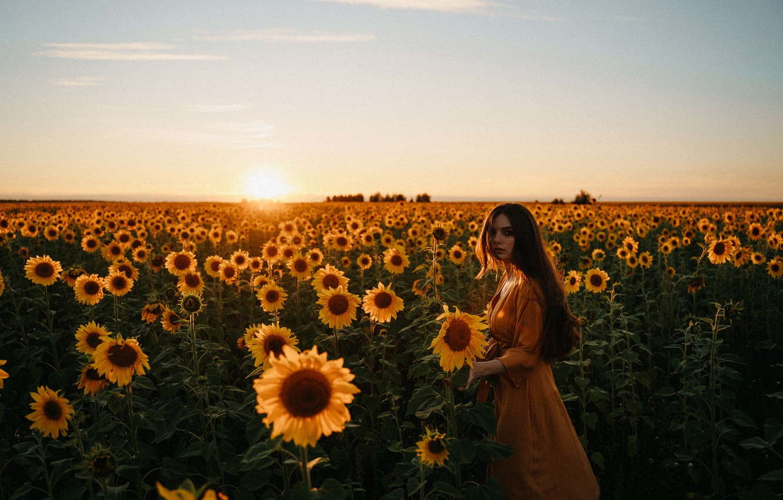 Photo wallpaper field, summer, girl, sunflowers, sunset, mood, Alexei Chelnokov, Лиза Челнокова