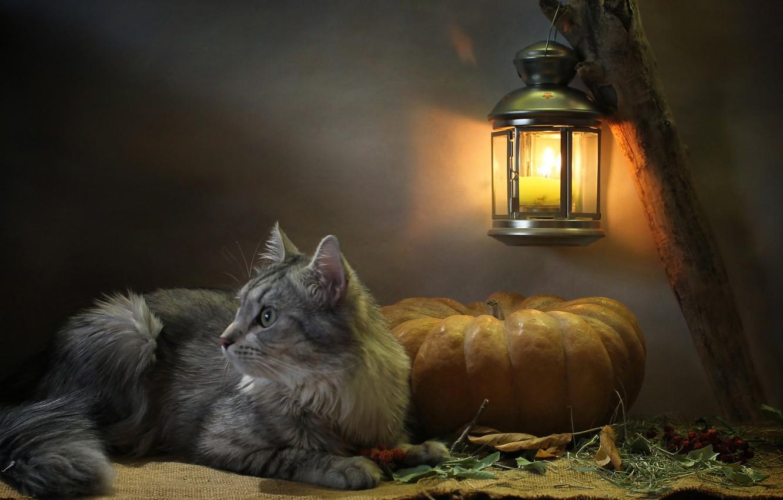 Photo wallpaper cat, cat, look, leaves, light, animal, candle, lantern, pumpkin, profile, burlap, Kovaleva Svetlana, Svetlana Kovaleva