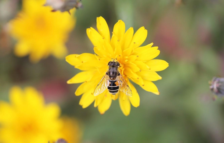 Photo wallpaper flower, fly, background, pollen