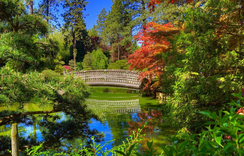 Photo wallpaper greens, the sun, trees, bridge, pond, Park, Washington