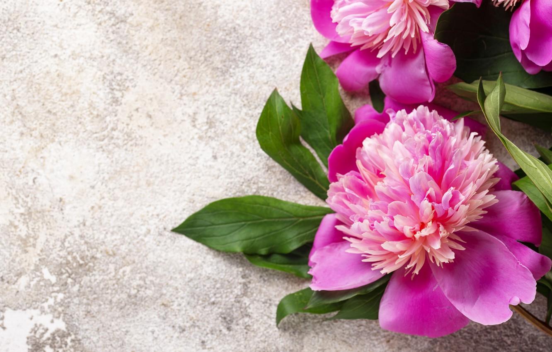 Photo wallpaper flowers, pink, pink, flowers, peonies, peonies