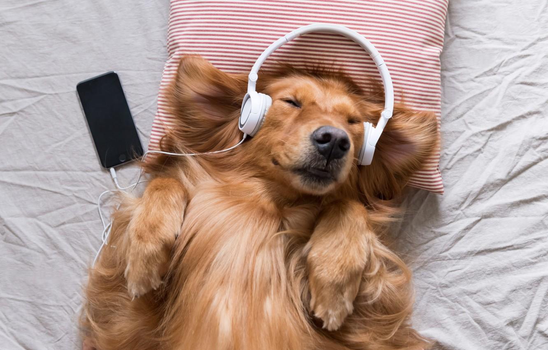 Photo wallpaper joy, music, dog, headphones, pillow, phone