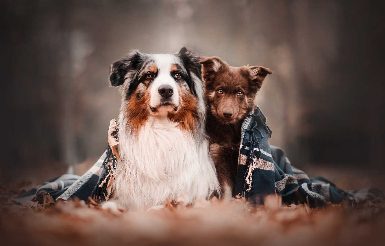Photo wallpaper dogs, nature, friends